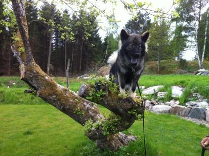 Nos- och skogsaktiviteter